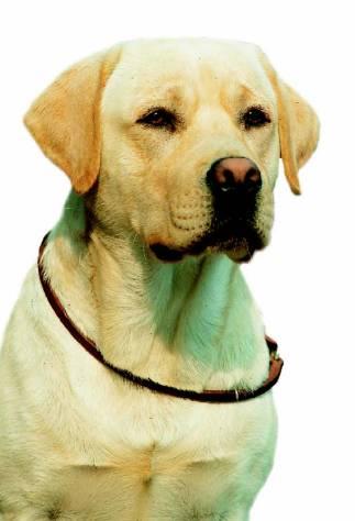 los perros de raza