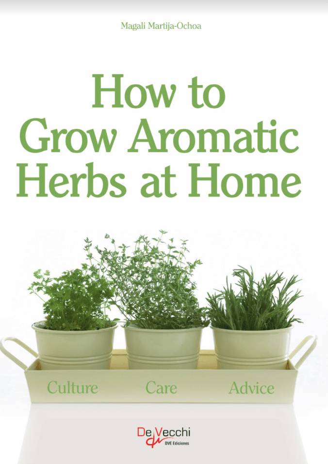 HOW TO GROW AROMATIC HERBS AT HOME