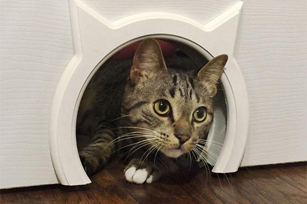 Двери с окошком для домашних животных, собак, кошек