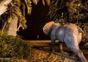 """5 De Junio,El Elefante,""""Proyecto Noche 365"""""""