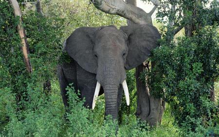 Jungle Animals | dvirfixler