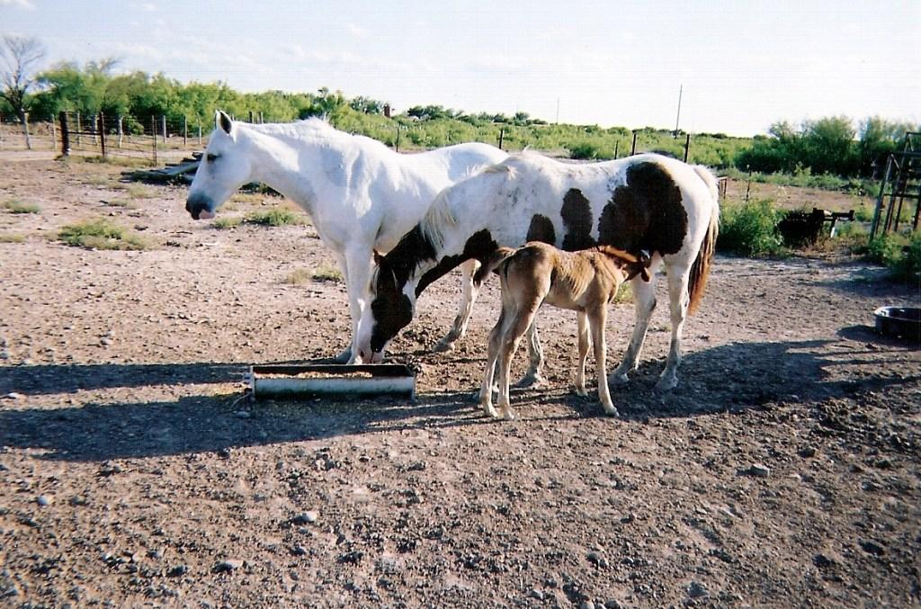 Horses – 1