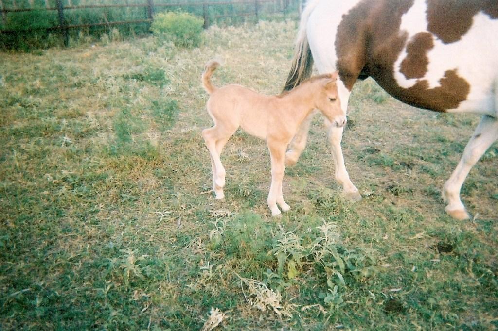 Horses – 4