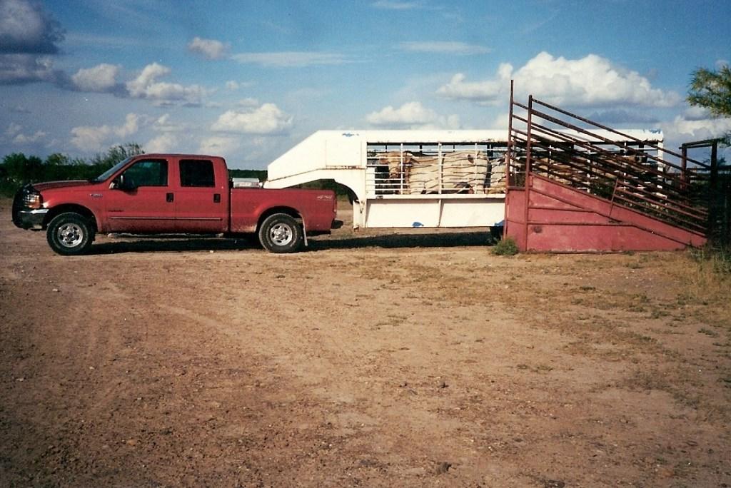 Ranching – 18