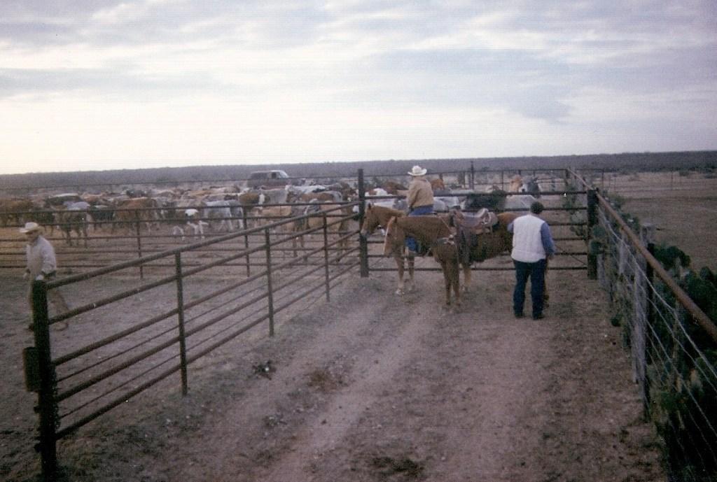 Ranching – 3