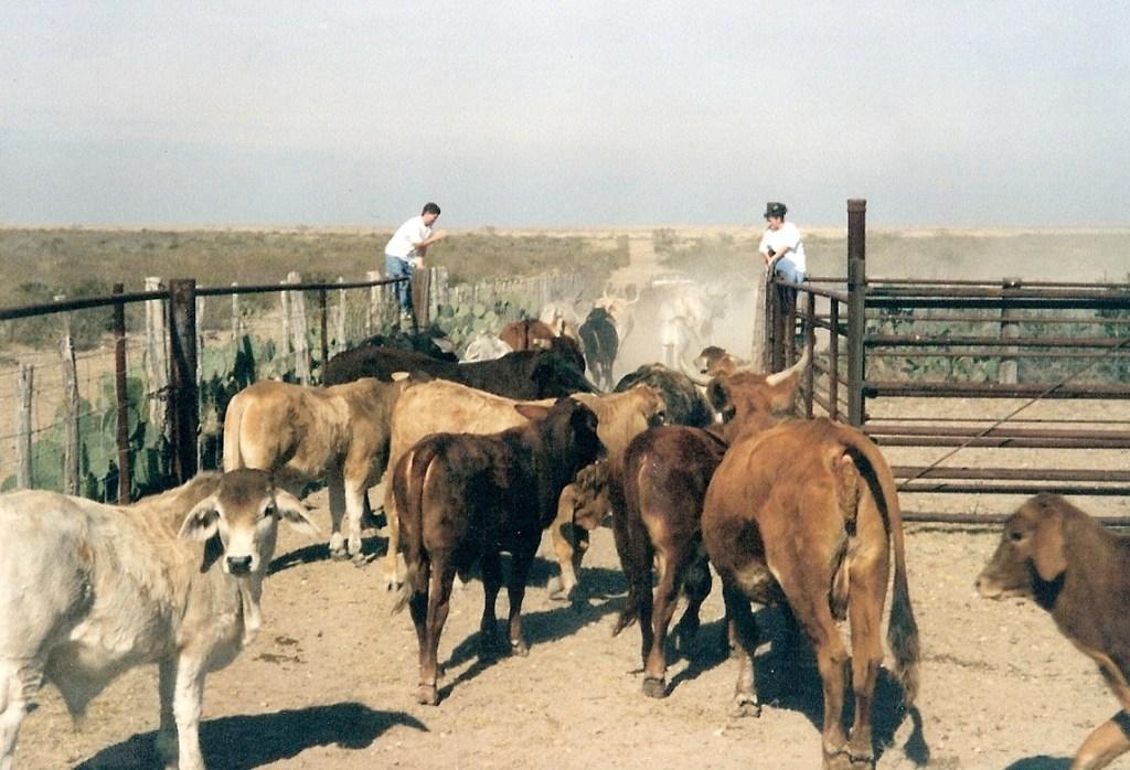 Ranching – 7