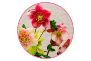 In season flowers for weddings florals