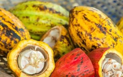 Dwingelderheem is nu een Fairtrade vergaderlocatie