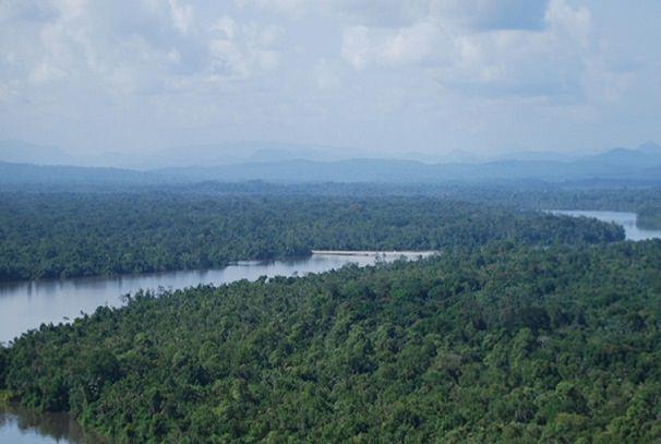 preservation de la foret le gabon obtient plus de 10 milliards de francs cfa - Protection des forêts : Le Gabon se dote d'un cadre réglementaire de surveillance