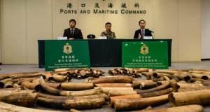 La Chine met fin au commerce de l'ivoire