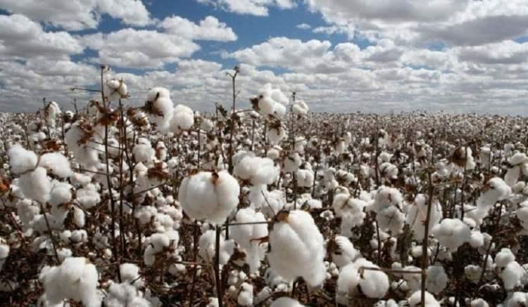 Coton en Afrique: Le Mali meilleur