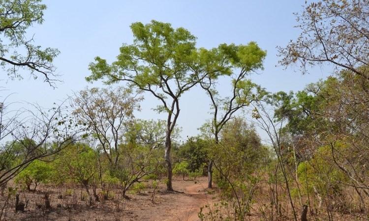 Burkina : Polémique sur un projet d'hôpital dans la forêt classée de Kua