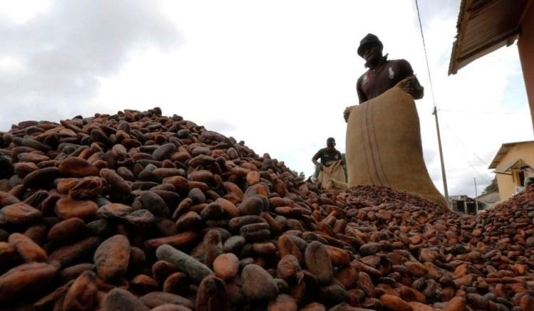 cacao cote divoire - Côte d'ivoire: De nouveaux contrats pour la filière cacao