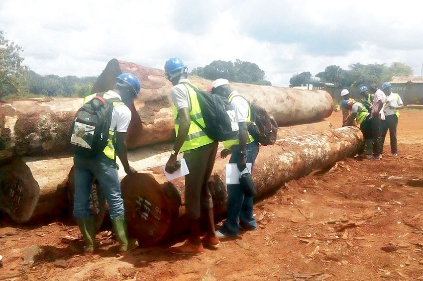 Gabon : Union sacrée pour accroître la traçabilité des grumes