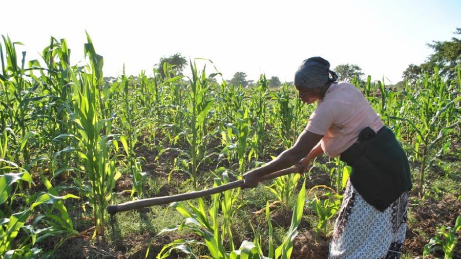 900x506 350492 - Afrique subsaharienne: le FIDA craint une «génération perdue» de jeunes ruraux