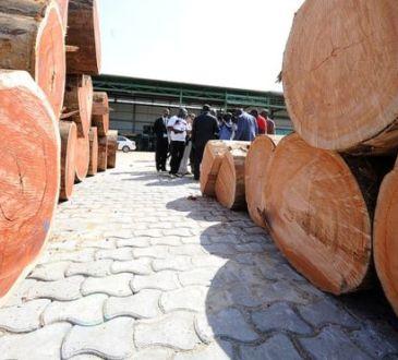 Au Gabon, les forestiers éprouvés par le scandale du bois précieux «kevazingo»
