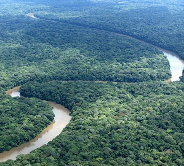 LaRDCs'inquiète pour sa forêt faute d'énergie électrique