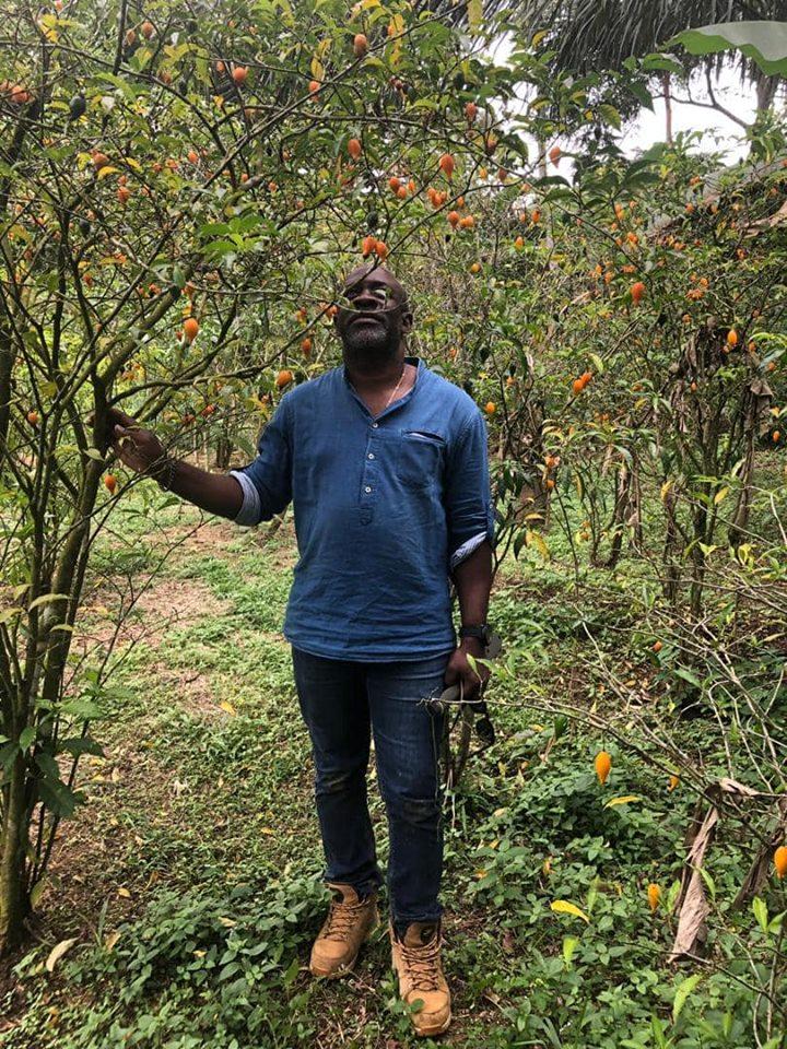 Gabon /1er Forum international sur l'iboga : Les préparatifs s'accélèrent à Libreville