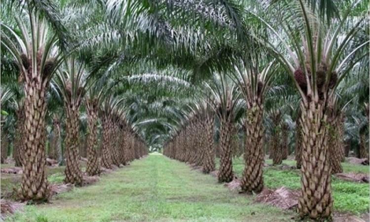 Conservation des écosystèmes : Olam Palm Gabon honorée