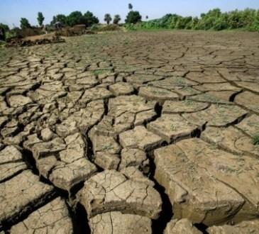 DuMarocau Sahel, l'Afrique cherche à réhabiliter ses terres agricoles dégradées