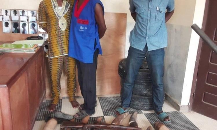 Trafic d'ivoire : Un enseignant à la tête d'un réseau de trafiquants