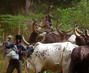Bas-Uélé : plaidoyer pour le recensement des éleveurs Mbororo
