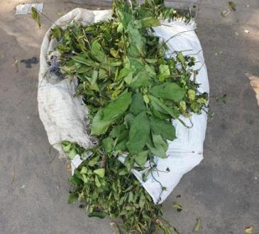 """Sud-Ubangi : une personne décédée à Gemena après une prise de """"Kongo Bololo"""" contre le Coronavirus"""