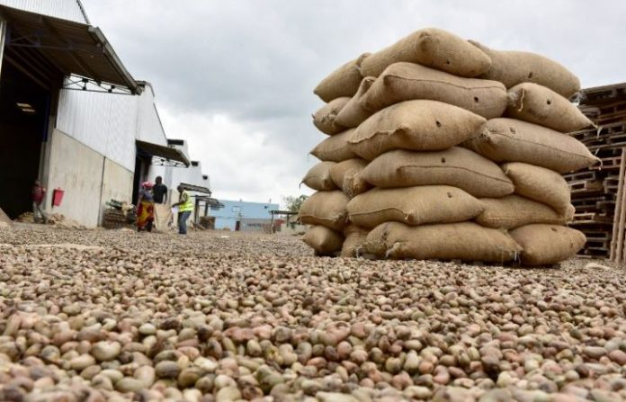 Côte d'Ivoire : un demi-milliard de dollars de perte pour les filières cajou et coton
