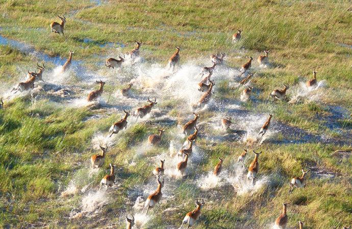 Namibie/Botswana : Menace pétrolière sur le Delta de l'Okavango