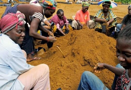 Projet Graine Gabon - Importation des intrants agricoles : Le gouvernement accorde de nouvelles exonérations