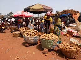 Sikasso Labondance de pomme de terre fait chuter les prix - Sikasso: L'abondance de pomme de terre fait chuter les prix