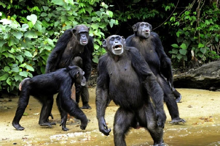 GabonEnvironnementDes cameras pour surveiller les forets - Gabon/Environnement:Des caméras pour surveiller les forêts
