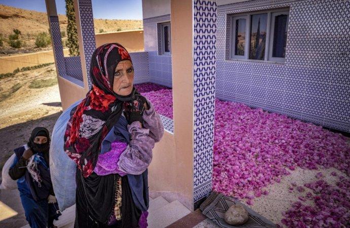 AuMaroc, le dur labeur des cueilleuses de roses
