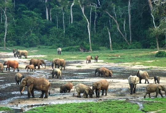 Protection des forêts:Le Parc national de l'Ivindo au patrimoine mondial de l'Humanité