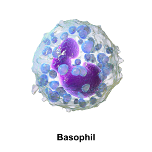 basophil-wc