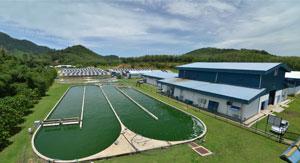DXN Spirulina farm