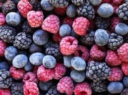 http://www.barfblog.com/tags/frozen-berry/