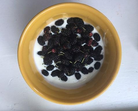 Mulberries in Yogurt