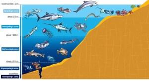 Ocean Zones  Lesson  HelpTeaching