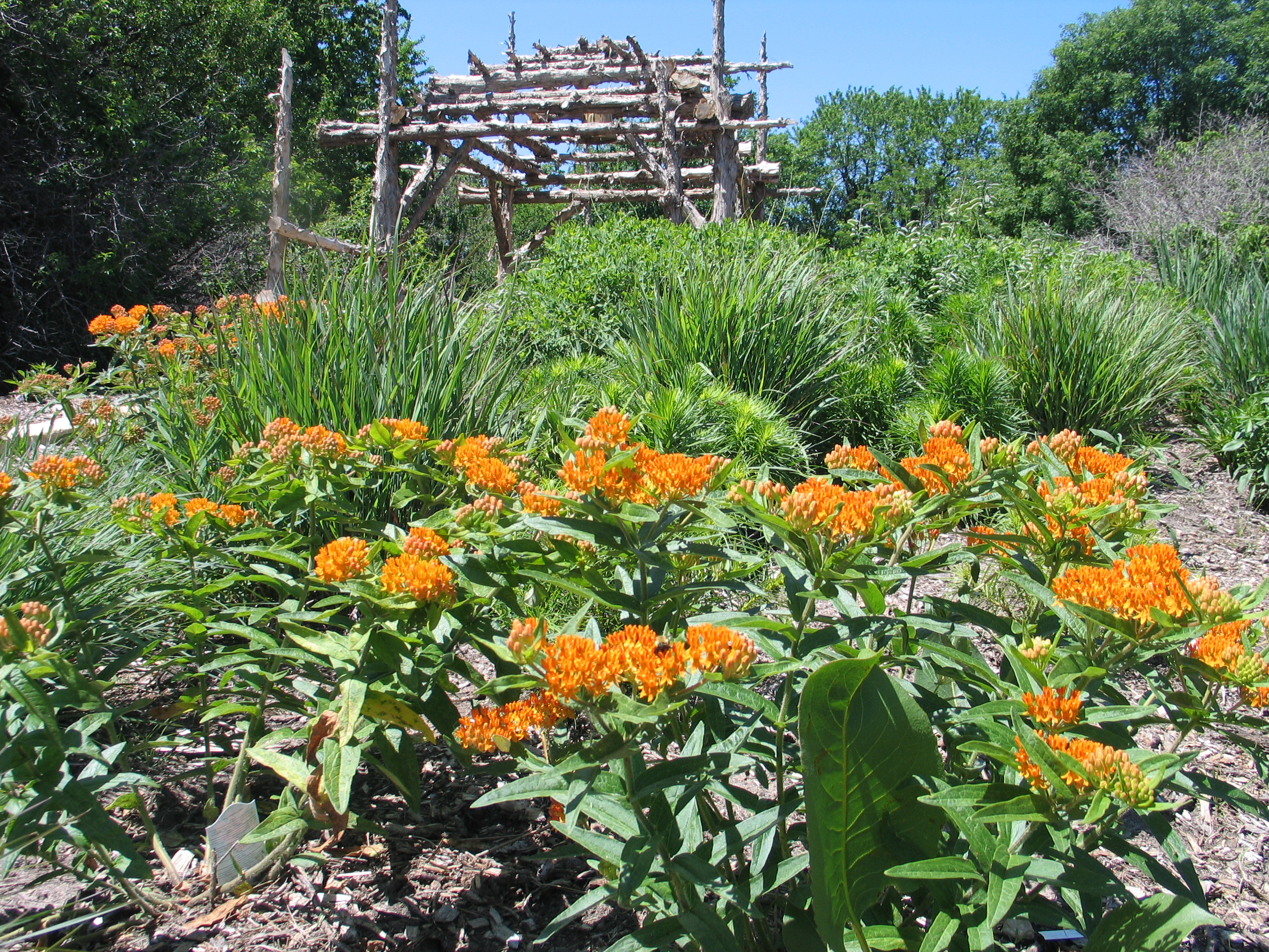 How to Design a Native Plant Garden - Dyck Arboretum on Tree Planting Ideas For Backyard id=35922
