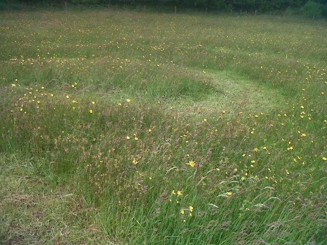Part of the Wildflower Labyrinth. It is hard to photograph!