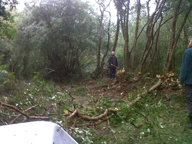 The laburnum stools we are coppicing. A volunteer using the felling axe.