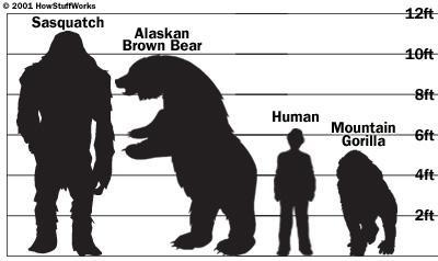 bigfoot-size