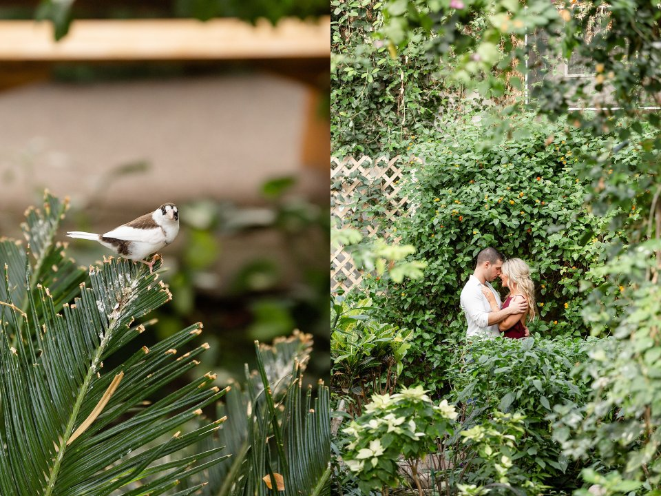 White bird at butterfly conservatory watching an engaged couple kiss