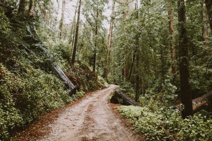 big-sur-elopement-photo-forest-0001