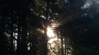 Evening Sun beaming through Trees in Mendocino Country