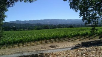 wine vineyards of Ukiah California