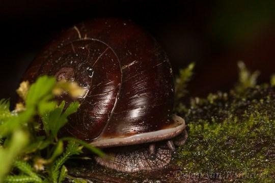 Unidentified mollusc