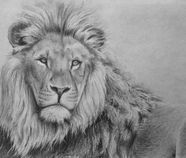 How To Draw A Lion In Pencil Online Art Lessons
