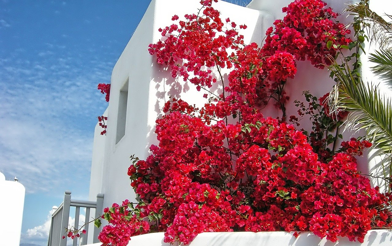 Building with flowers in Mykonos